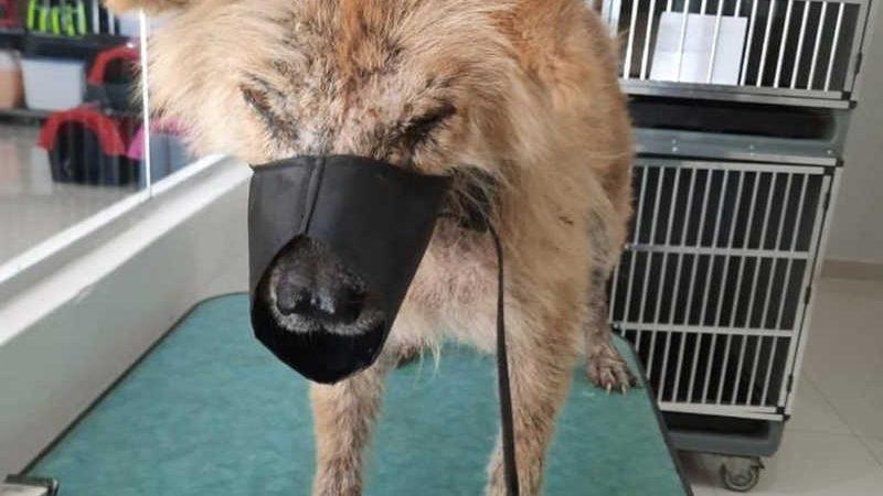 Animal está internado em clínica para tratamento — Foto: Projeto Lunaar
