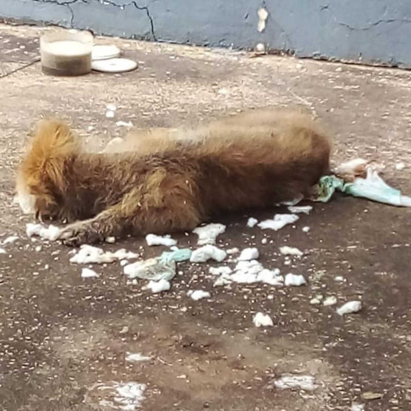 Cadela e outros animais viviam em situação de maus-tratos — Foto: Projeto Lunaar