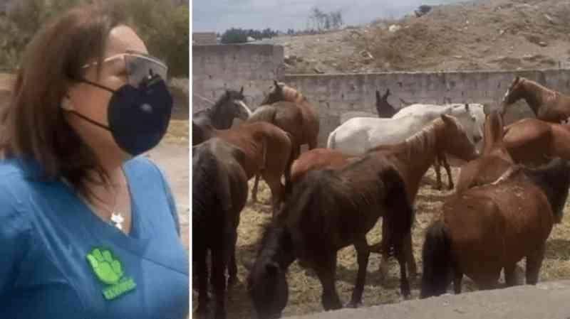 Denúncia de maus-tratos a 17 cavalos e 2 burros que seriam levados para matadouro