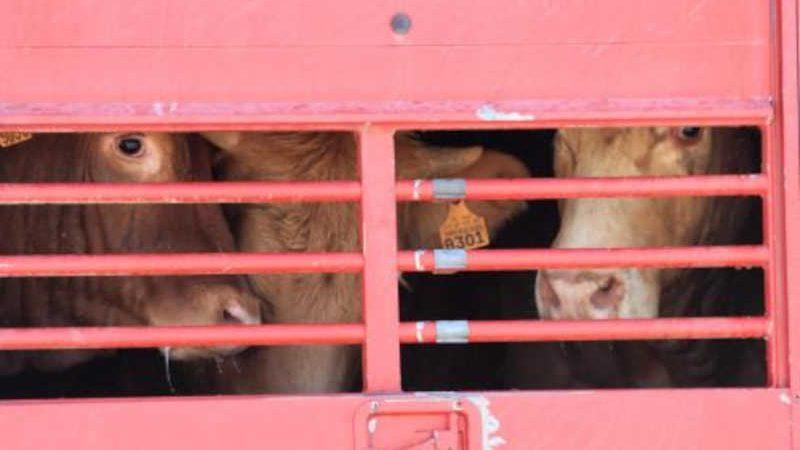 Foto da PATAV - Plataforma Anti-Transporte de Animais Vivos.