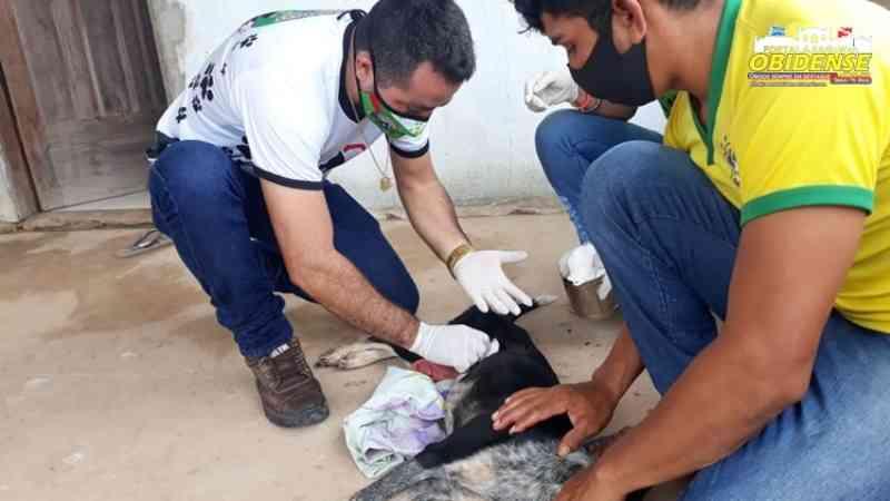 Animal sofre perfuração no abdômen e o fato chama atenção pela crueldade em Óbidos, PA