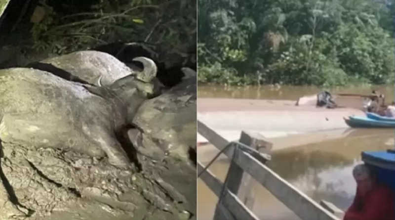 Balsa que naufragou com bois na ilha de Marajó era do presidente da Câmara Municipal de Muaná, PA
