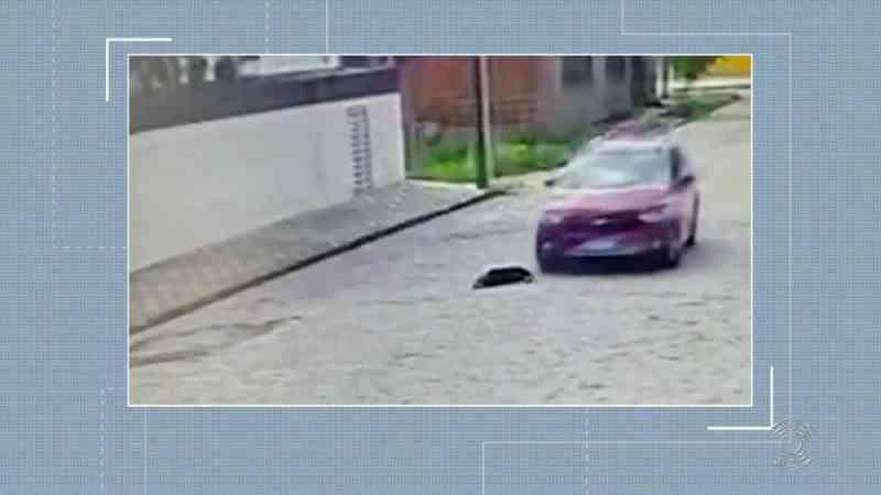 Cadela é atropelada por carro, e motorista não presta socorro, em Campina Grande; VÍDEO