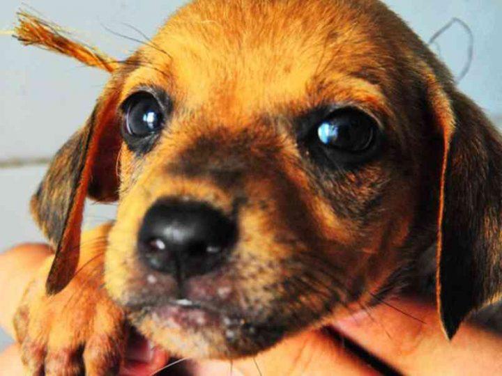 Centro de Zoonoses de João Pessoa (PB) abre agendamento para 336 cirurgias de esterilização de cães e gatos