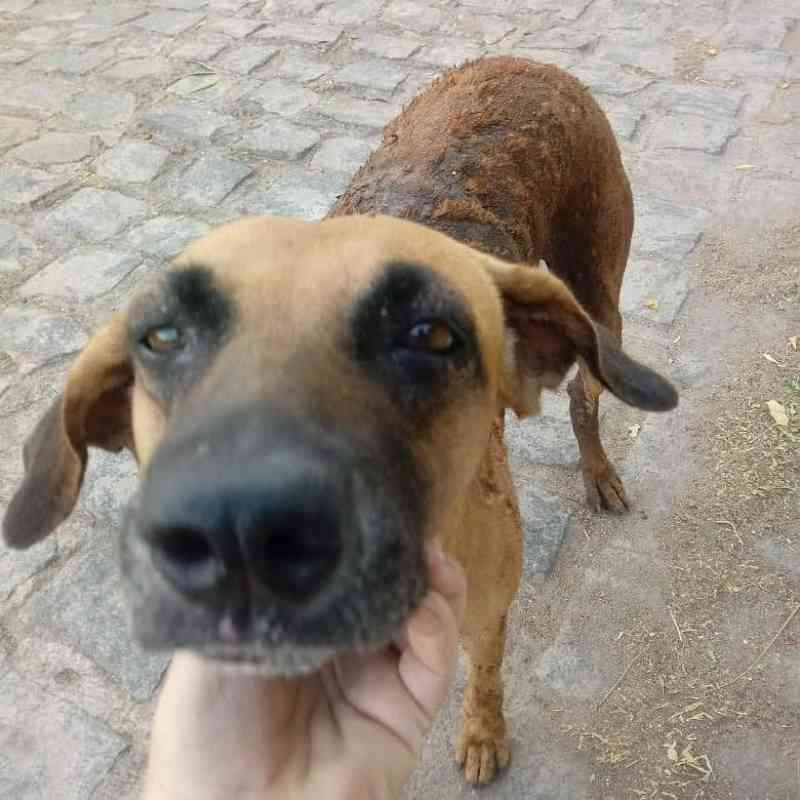 Cadela com parte do corpo queimada é resgatada por moradores em Sousa, PB