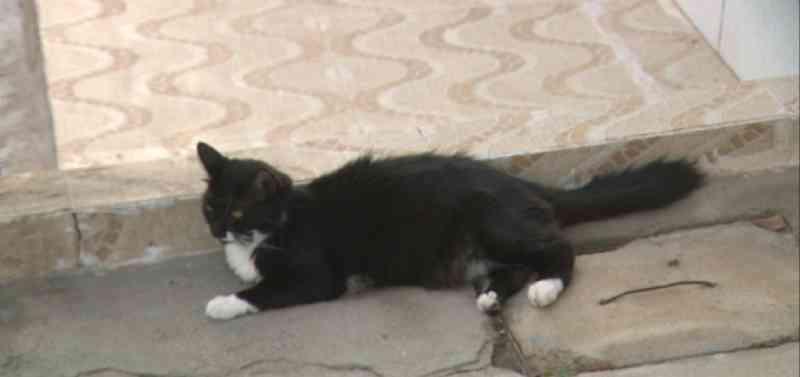 Polícia Civil vai investigar matança de cães e gatos em uma única rua de Campina Grande, PB