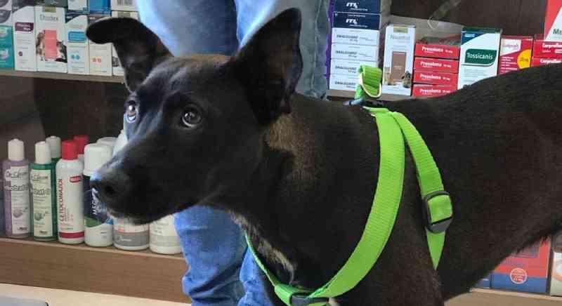 Homem que arrastou cadela presa a moto por seis quilômetros recebe liberdade provisória