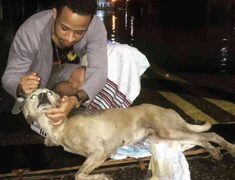 Abandonado, cão tetraplégico é resgatado em meio às fortes chuvas que caíram no Recife, PE