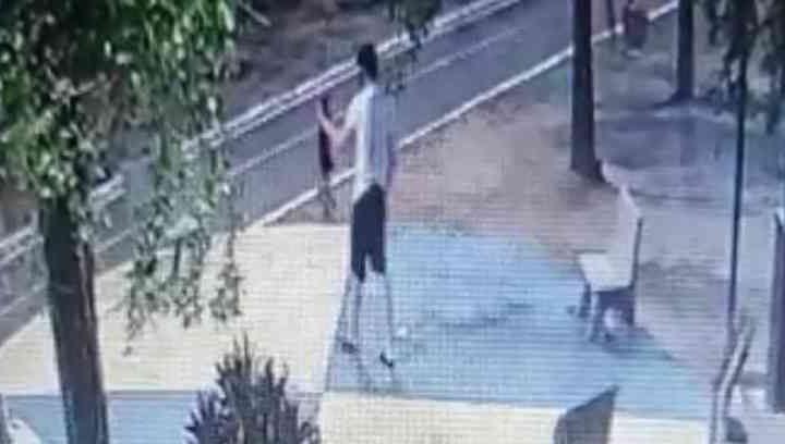 Investigação de crime de maus-tratos contra gatos no Recife (PE) completa dois meses sem respostas