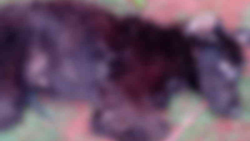 Rapaz mata cachorro, jogando-o de 20 metros de altura, mas acaba preso em flagrante