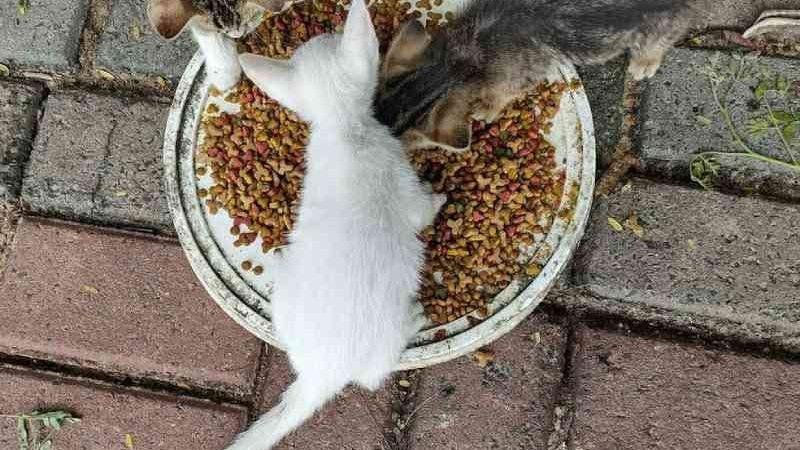 Projeto voluntário localiza mais de 100 gatos abandonados em um mês às margens de rio em Teresina, PI