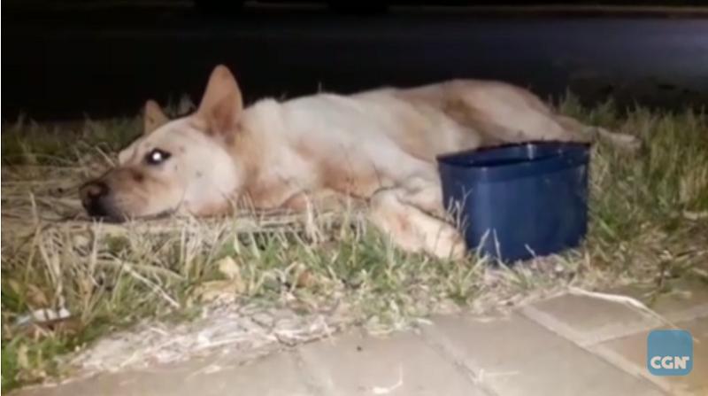 Cachorro é atropelado por carro e motorista não presta socorro; moradores de Cascavel (PR) ficam indignados
