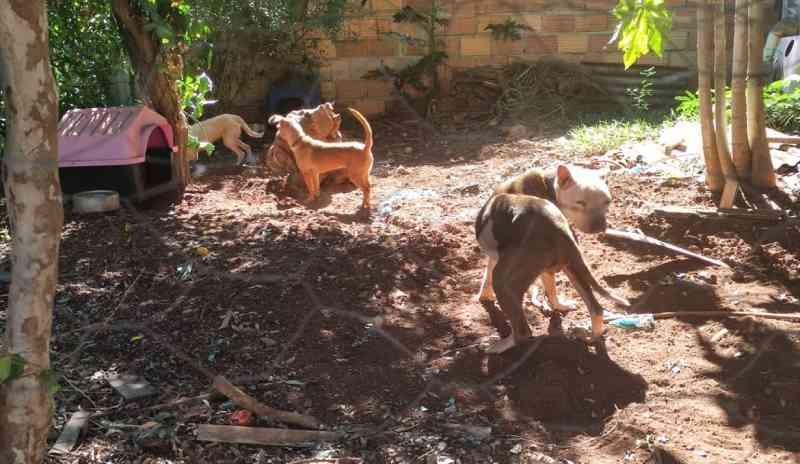 Rapaz é preso por maus-tratos a animais em Itapejara D'Oeste, PR