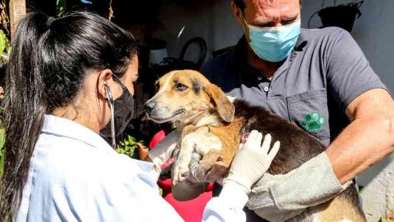 Denúncias de maus-tratos aumentaram com criação do Bem-Estar Animal em Maringá, PR