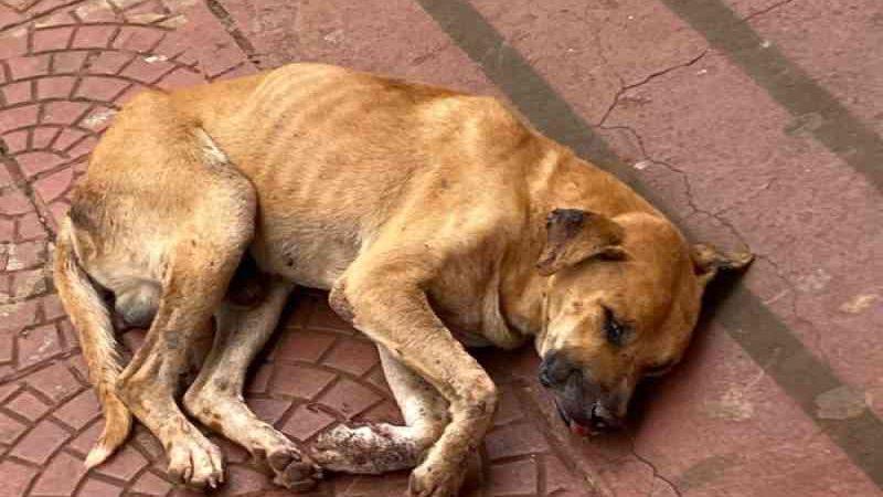Cão tem os dentes arrancados e morre em Nova Cantu, PR