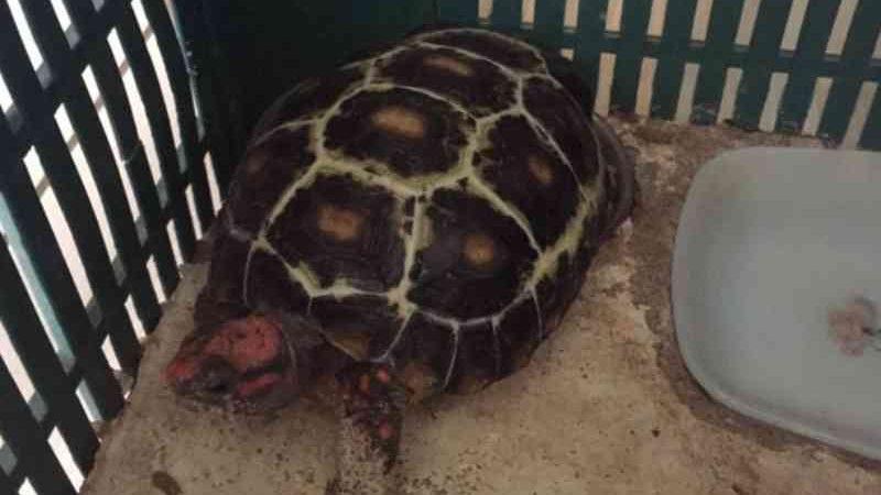 Mais de 10 animais silvestres são apreendidos em casa, em Paranavaí, PR
