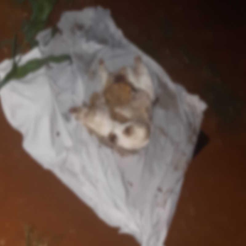 Cachorro é sacrificado em possível ritual; animal estava sem a cabeça e as patas, com farofa na barriga