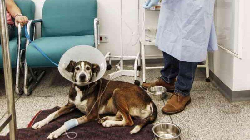 Falta de remédios afeta hospitais veterinários do Paraná e adia cirurgias em animais