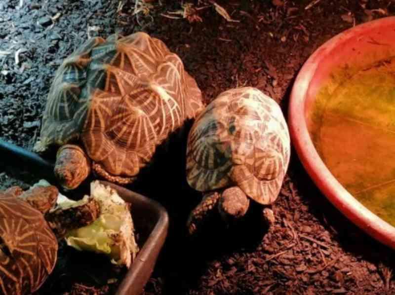 Tarântulas e tartarugas entre os 44 animais apreendidos pela ASAE em Cascais, Portugal
