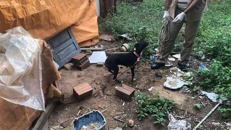 Polícia resgata cão após denúncia de maus-tratos e fará operação a cada 15 dias em Teresina, PI