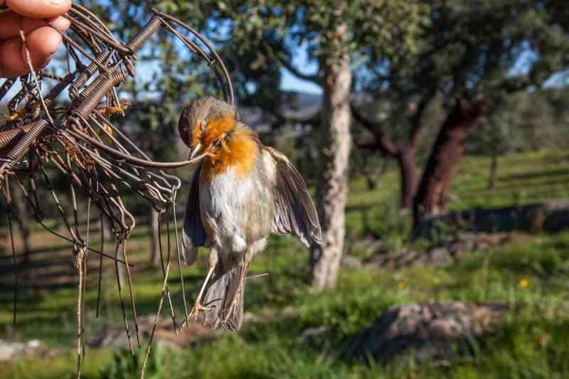 Armadilhas para aves podem ser proibidas esta semana em Portugal