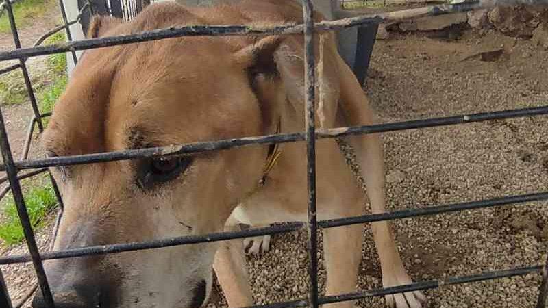 Ministério Público acusa protetora de animais por 23 crimes de maus-tratos em Portugal