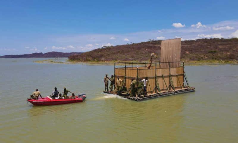 A barcaça com uma girafa de Rothschild a bordo. Imagem: Save the Giraffes