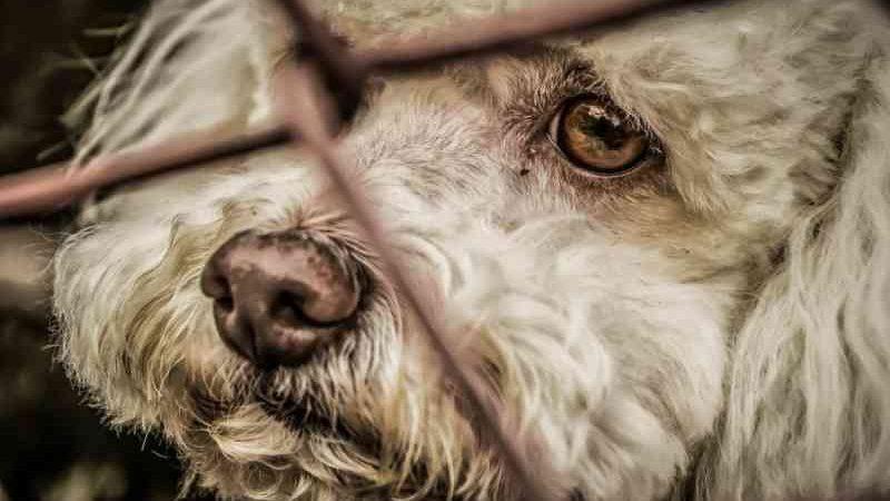 Ativistas exigem políticas públicas de proteção animal em São Gonçalo, RJ