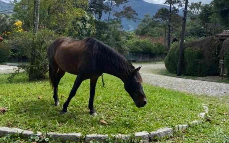 Tutores de cavalos soltos nas ruas de Teresópolis (RJ) são multados em até R$ 2 mil