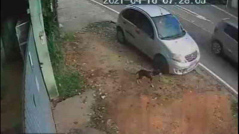 Câmera flagra abandono de cachorro na porta de ONG em Volta Redonda (RJ) dois dias após adoção