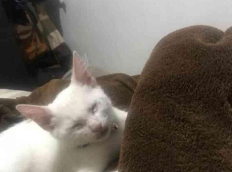 Polícia 'fecha o cerco' a homem que soltou pit bull para ataque a gato na Região dos Lagos, RJ