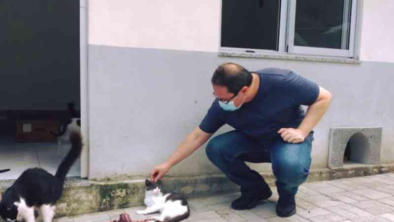 Prefeitura do Rio de Janeiro terá de registrar animais sem tutor conhecido