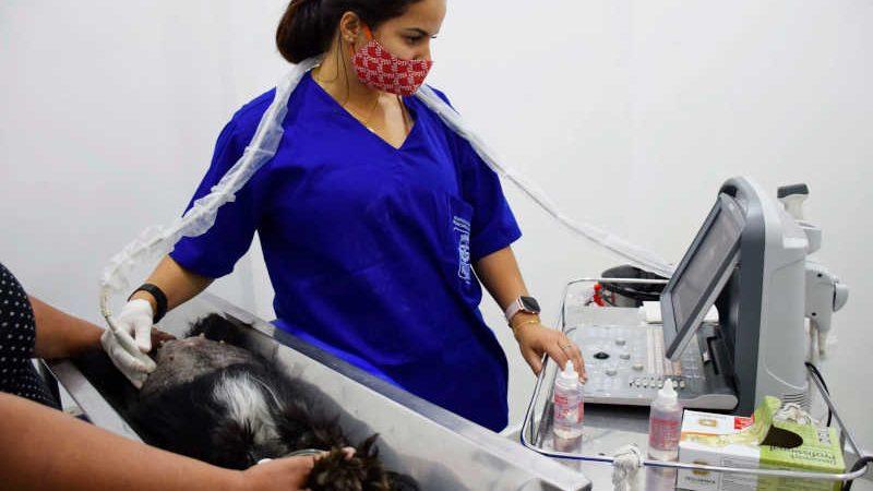 Hospital Veterinário Público realiza 20 mil atendimentos em oito meses de funcionamento em Resende, RJ