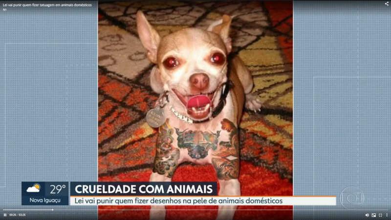 Lei aprovada na Alerj proíbe tatuagens em animais
