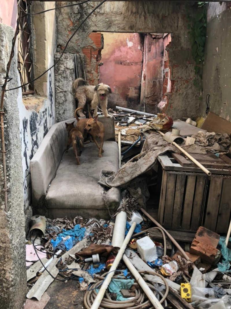 Grupos se unem para resgatar cães que estavam se alimentando das próprias fezes no Rio