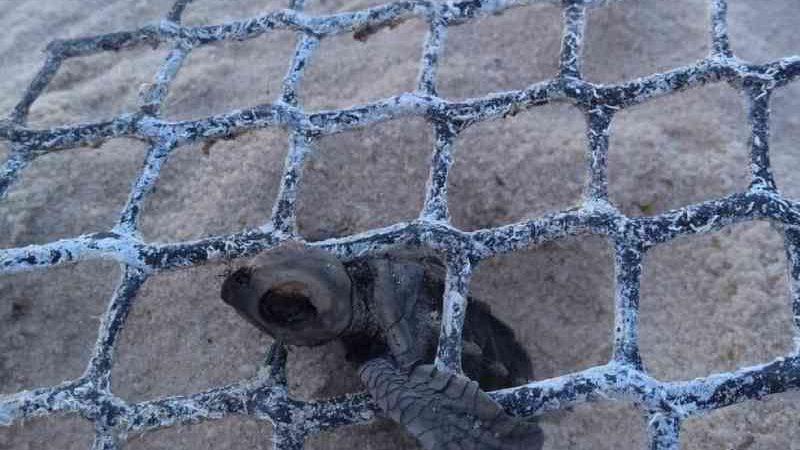 Três tartarugas são encontradas mortas em praias de Nísia Floresta, no litoral do RN