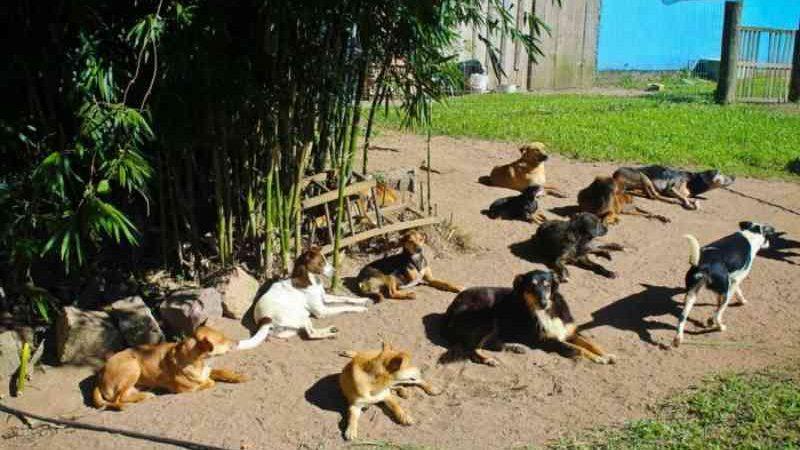O frio está chegando: campanha da Arca visa agasalhar cãezinhos neste inverno em Camaquã, RS