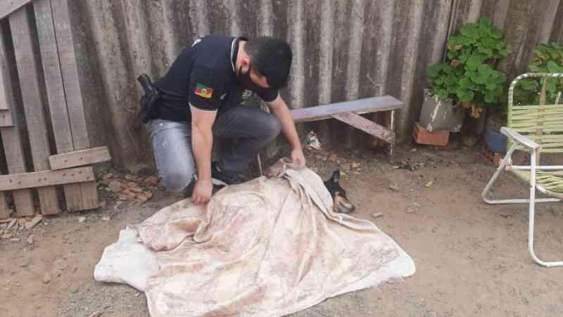 Homem mata cachorro do vizinho a chutes em Canoas, RS