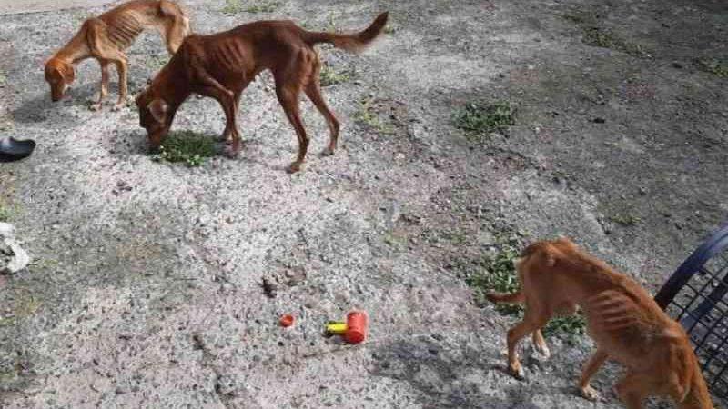 Mulher é presa em flagrante por maus-tratos a animais em Canoas, RS