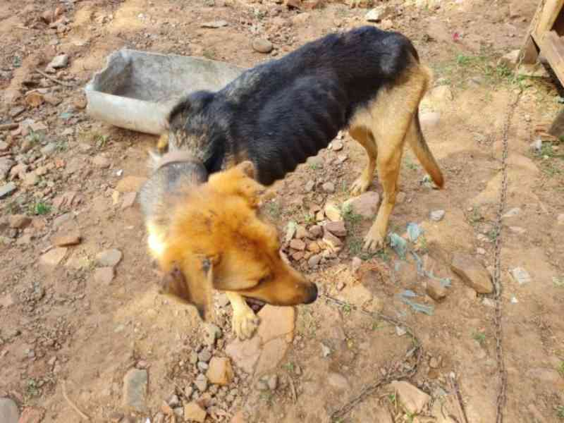 Patram prende homem por maus-tratos contra cães em Cruzeiro do Sul, RS