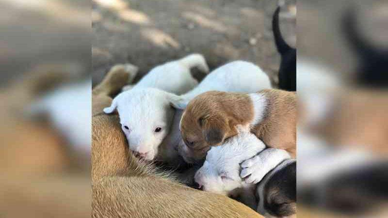 Filhotes de cachorro são encontrados abandonados dentro de mala, em Dom Pedrito, RS