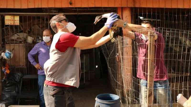 Mais de 900 animais em situação de maus-tratos são recuperados de aviário em Gravataí, RS