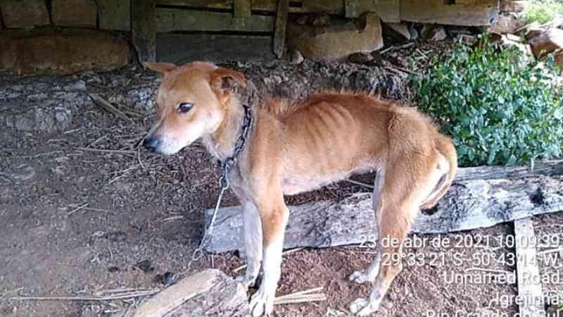 Polícia Ambiental atende denúncia de maus-tratos contra cachorros em Igrejinha, RS