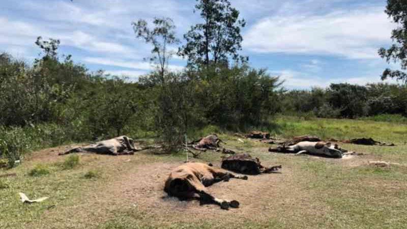 Polícia Civil encontra cemitério de cavalos em Nova Santa Rita, RS