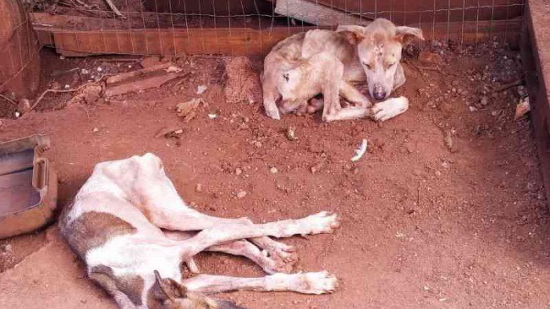 Mais de 40 cães em situação de maus-tratos são localizados em canil clandestino no RS