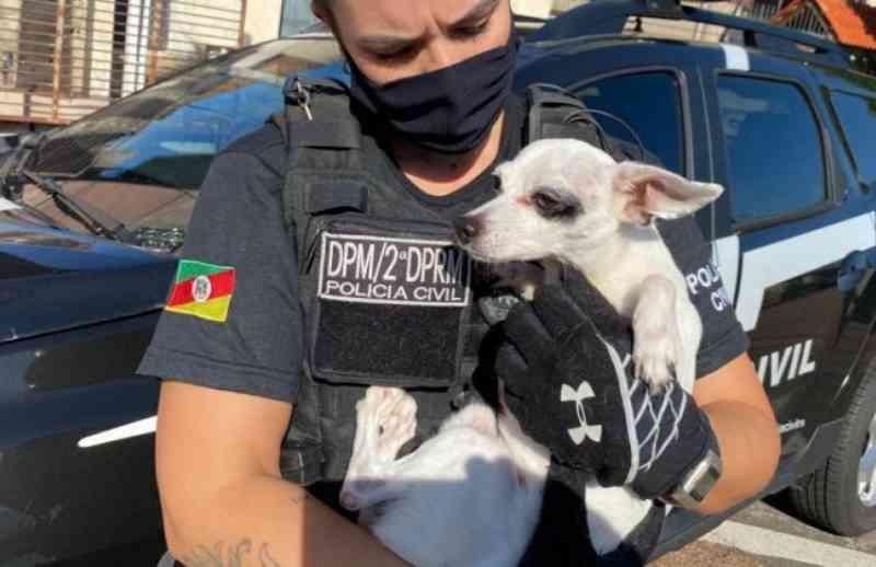 Cão é resgatado nesta segunda (19) após ser obrigado a inalar fumaça de maconha