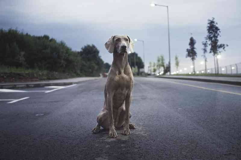 Um em cada quatro novos tutores de cães no Reino Unido pensa em abandonar os animais