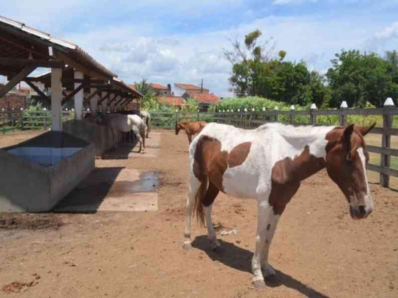 Mais de 80 animais de grande porte foram abandonados nos últimos 10 dias em Nossa Senhora do Socorro, SE