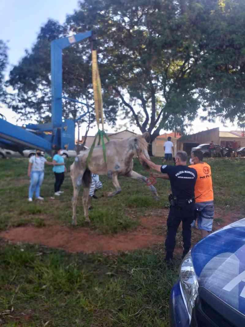 Polícia Municipal de Artur Nogueira (SP) resgata cavalo em situação de maus-tratos