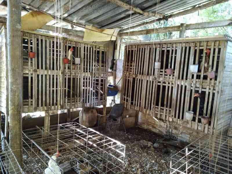 Polícia aplica multa de mais de R$ 600 mil após encontrar 200 galos usados em rinha em Avaí, SP